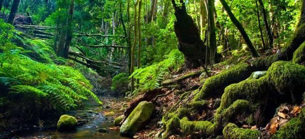 Parque Nacional Garajonay La Gomera.jpg